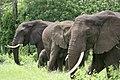 20090507-TZ-NGO Safari 355 (4678056340).jpg