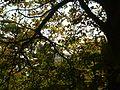 2010-30-07 Kiew Botanischer Garten - Angela M. Arnold fec.jpg