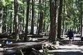 2013 Longmire Campground Opening 7 (9010528949).jpg