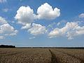 20140716 Zuidelijk Flevoland.jpg
