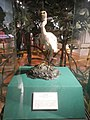 9912National Museum of Natural History Manila 13.jpg