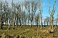 A Spooky Old Wood Near Dogstone Hill - geograph.org.uk - 1708667.jpg