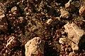 A Texas Ant Colony.jpg