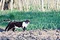 A cat in Ubezhenskaya-2012-04-14.jpg