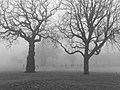 A foggy winter morning in Cannon Hill Park 03.jpg