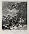 A group of hunting dogs, including greyhounds and harriers. Wellcome V0021043EL.jpg