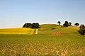 A hill in Thalheim, Kapelln.jpg
