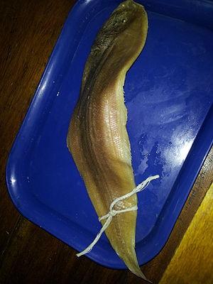 Tonguefish - A preserved tongue sole at a lab