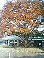 A scene people red leaves winter Japan.jpg