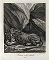 A sleeping lion in a mountainous landscape. Etching by J. E. Wellcome V0021047EL.jpg