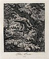 A wild cat climbing down a tree in a forest. Etching by J. E Wellcome V0021067EL.jpg