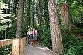 Accessible Boardwalk, Gifford Pinchot National Forest (36294174656).jpg