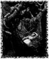 Aimard - Le Grand Chef des Aucas, 1889, illust 70.png