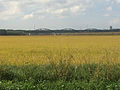 Alcacer do Sal Rice Fields.jpg