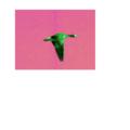 Alien bird.png