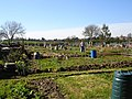 Allotments on Riddles Road - geograph.org.uk - 364027.jpg