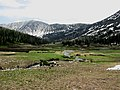 Alpine meadow - Flickr - brewbooks.jpg
