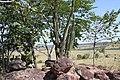 Alto Araguaia - State of Mato Grosso, Brazil - panoramio (145).jpg