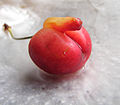 An unusually shaped cherry.jpg