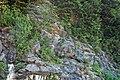 Anakeesta Formation (Neoproterozoic; Morton Overlook roadcut, Great Smoky Mountains, Tennessee, USA) (36912920131).jpg