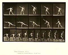 Animal locomotion. Plate 313 (Boston Public Library).jpg