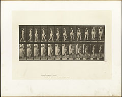Animal locomotion. Plate 99 (Boston Public Library).jpg