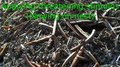 File:Ants - Movement for Defense - 2013-4-18 - Alberta Canada.webm