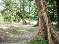 Ao Nang, Mueang Krabi District, Krabi, Thailand - panoramio (12).jpg