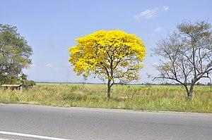 Flora De Venezuela Wikipedia La Enciclopedia Libre