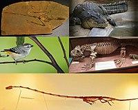 Archosauromorpha.jpg