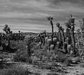 Arthur B. Ripley Desert Woodland State Park (5419753421).jpg