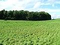 Ash Spring Wood - geograph.org.uk - 946387.jpg