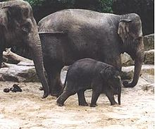 Environmental issues in Thailand - Wikipedia