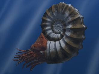 Ammonoidea - Artist's reconstruction of Asteroceras