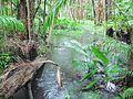 Au-Q-Eprapah Koala Glade riverlet.jpg