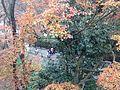 Autumn Leaves in Kiyomizudera Temple 2.JPG
