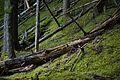 Avalanche Creek Trail (4177000236).jpg