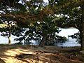 Ayameshima Island in Ohori Park.JPG