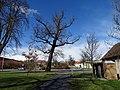 Březiněves, park, památný dub letní.jpg