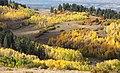 BOULDER MT, GARFIELD COUNTY, UT - 2016-09-30 fall color (2) (30341448531).jpg