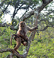 Baboon Trails - Flickr - askmeaks.jpg