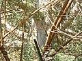 Baobab (412789776).jpg