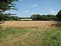 Barley field south-west of Burgate Lane - geograph.org.uk - 1451498.jpg