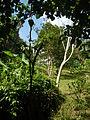 Batangasjf9369 29.JPG