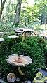 Baumberge, Herbstimpressionen, Pilze, Sonne, Moos.jpg
