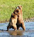 Bear Alaska (4).jpg
