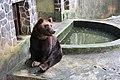 Bear wants to eat.jpg