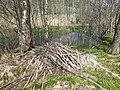 BeaverHaidSaalfelden 09.jpg