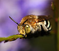 Bee I've got my eye on you.jpg