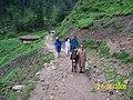 Behari Village, Pakistan - panoramio.jpg